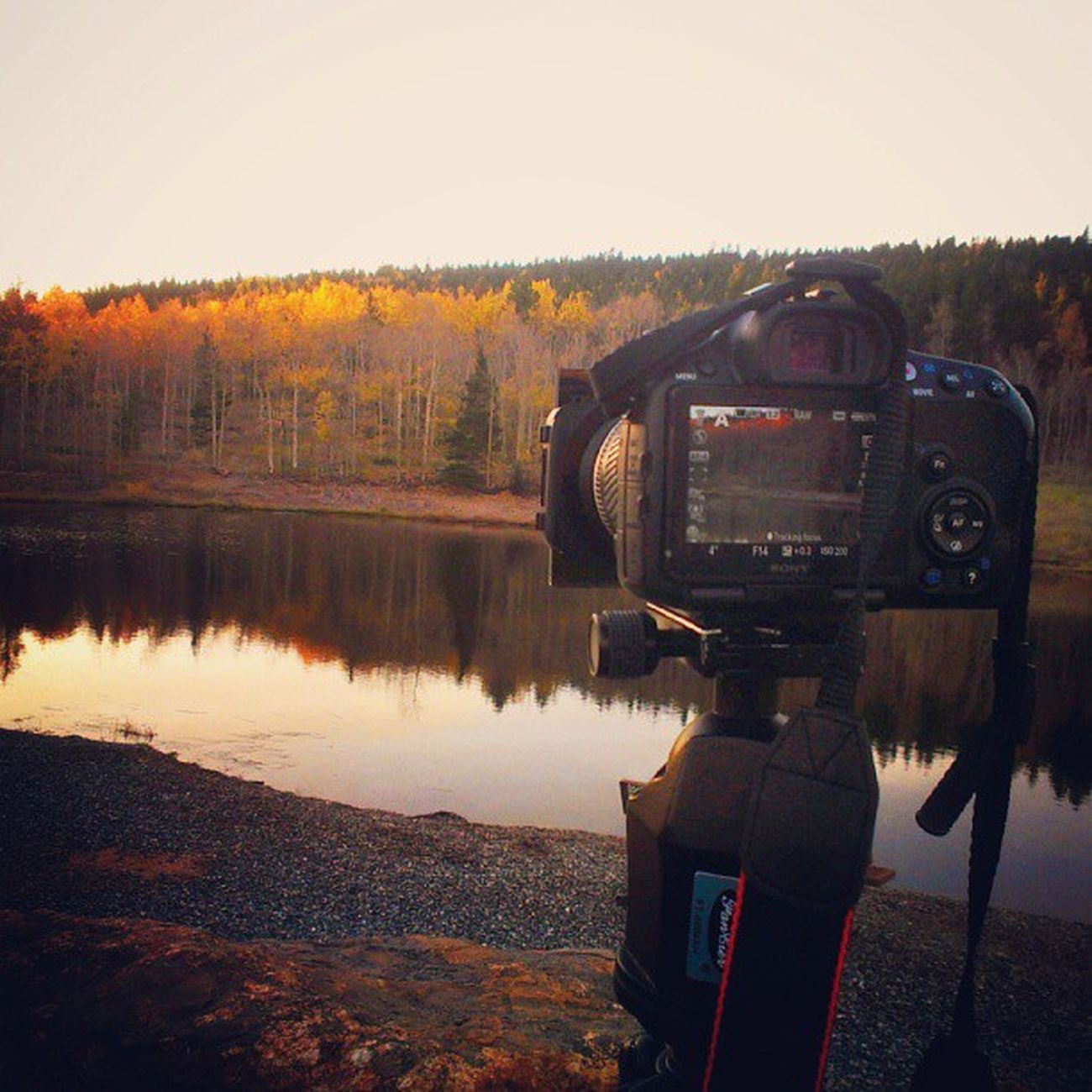 Shooting Fall Colorado colors at Sunrise this am Cowx autumn sony btl behindthelens