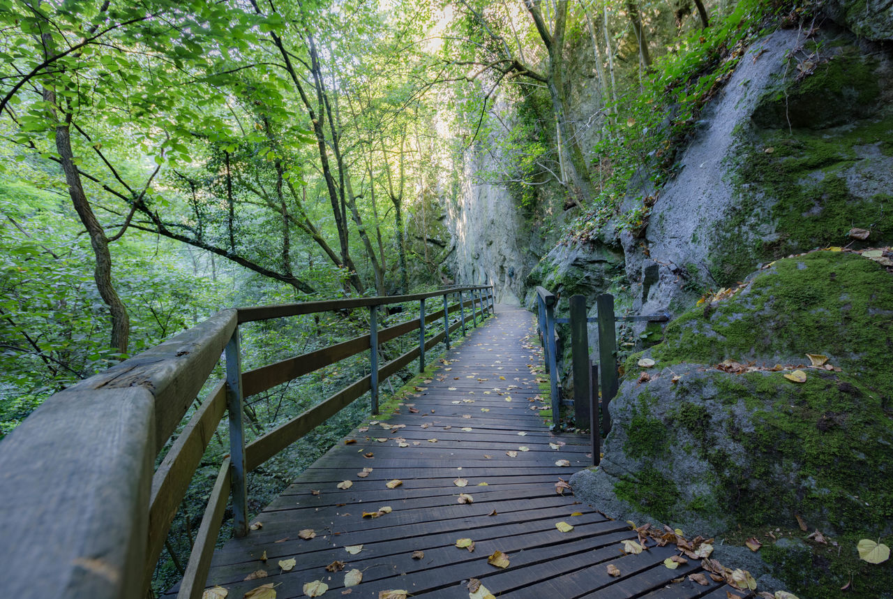 railing, the way forward, nature, wood - material, forest, tranquility, no people, footbridge, day, outdoors, tree, beauty in nature