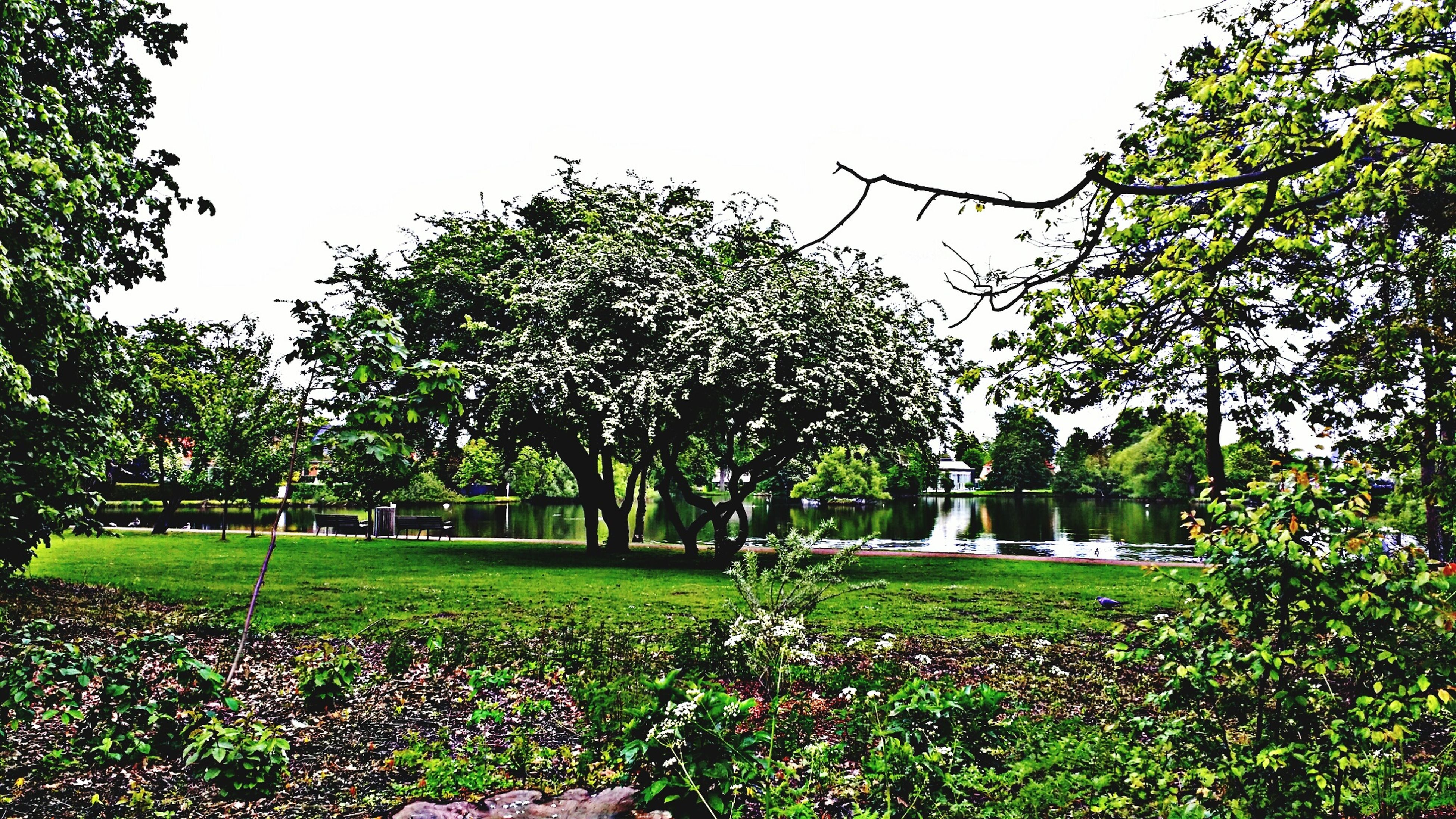 tree, growth, flower, green color, clear sky, plant, nature, beauty in nature, tranquility, grass, park - man made space, tranquil scene, freshness, formal garden, leaf, day, branch, scenics, field, garden