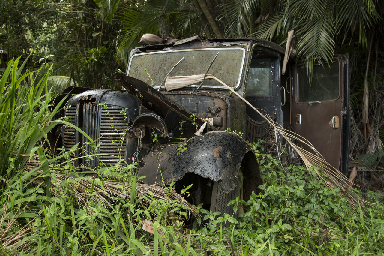 transportation, abandoned, car, plant, day, no people, growth, outdoors
