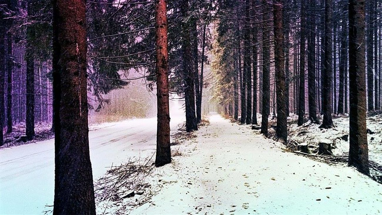Tree Nature Beauty In Nature Shadow Outdoors Tree Trunk Landscape Snow Winter Cold Temperature Forest Colors Happylife Homeland Enjoyeverymoment Roháče Zuberec Thisisslovakia