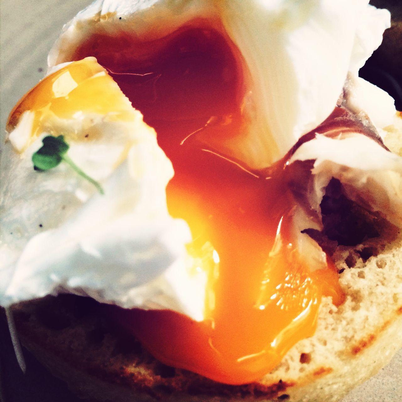 Beautiful stock photos of egg, Auckland, Close-Up, Detail, Egg