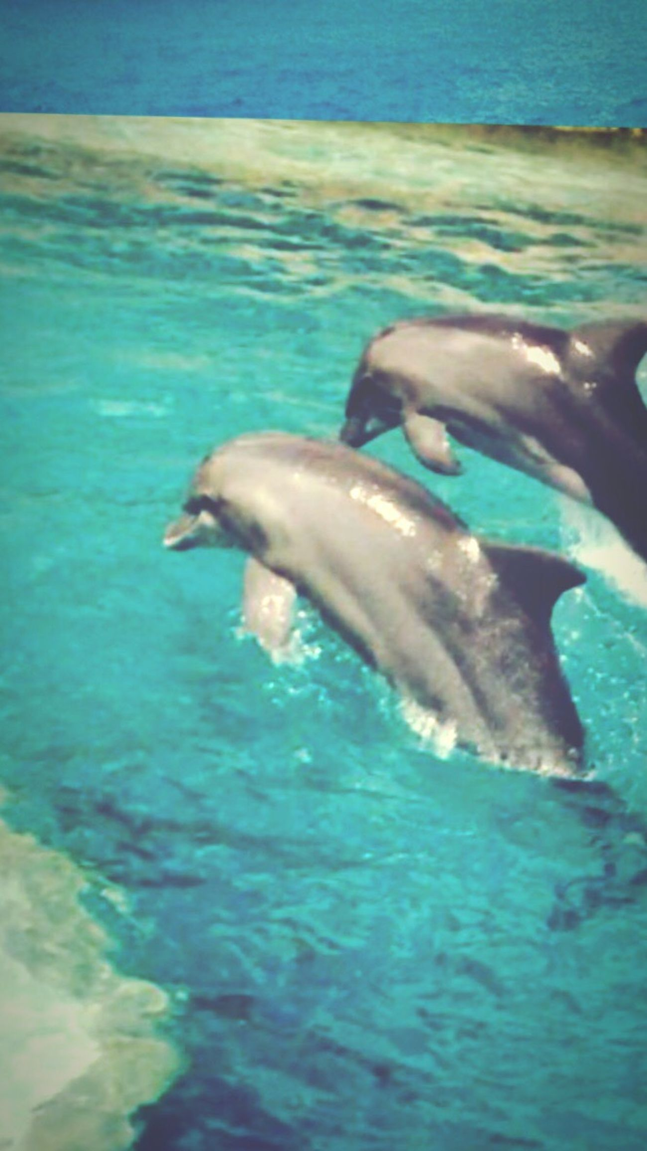Mexico Dolphins Amazing