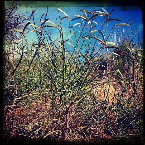 Nature Landscape EyeEm Nature Lover