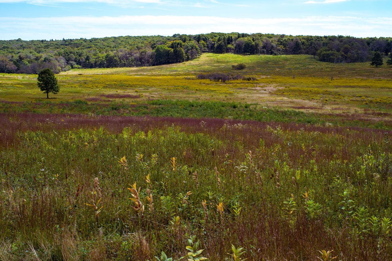 Big Meadows Grass Grassland Grassy Lonely Tree Me National Park Nature Outdoors Shenandoah National Park Sky Virginia Wild Flowers