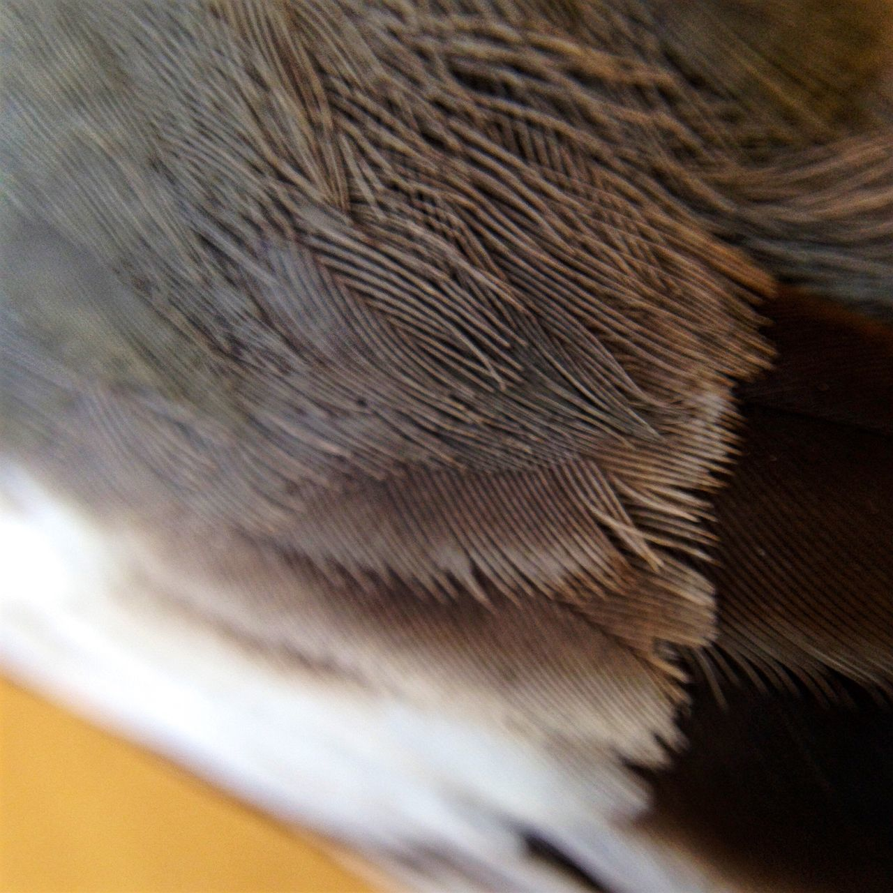 one animal, close-up, animal themes, selective focus, no people, indoors, day, domestic animals, bird, nature, mammal