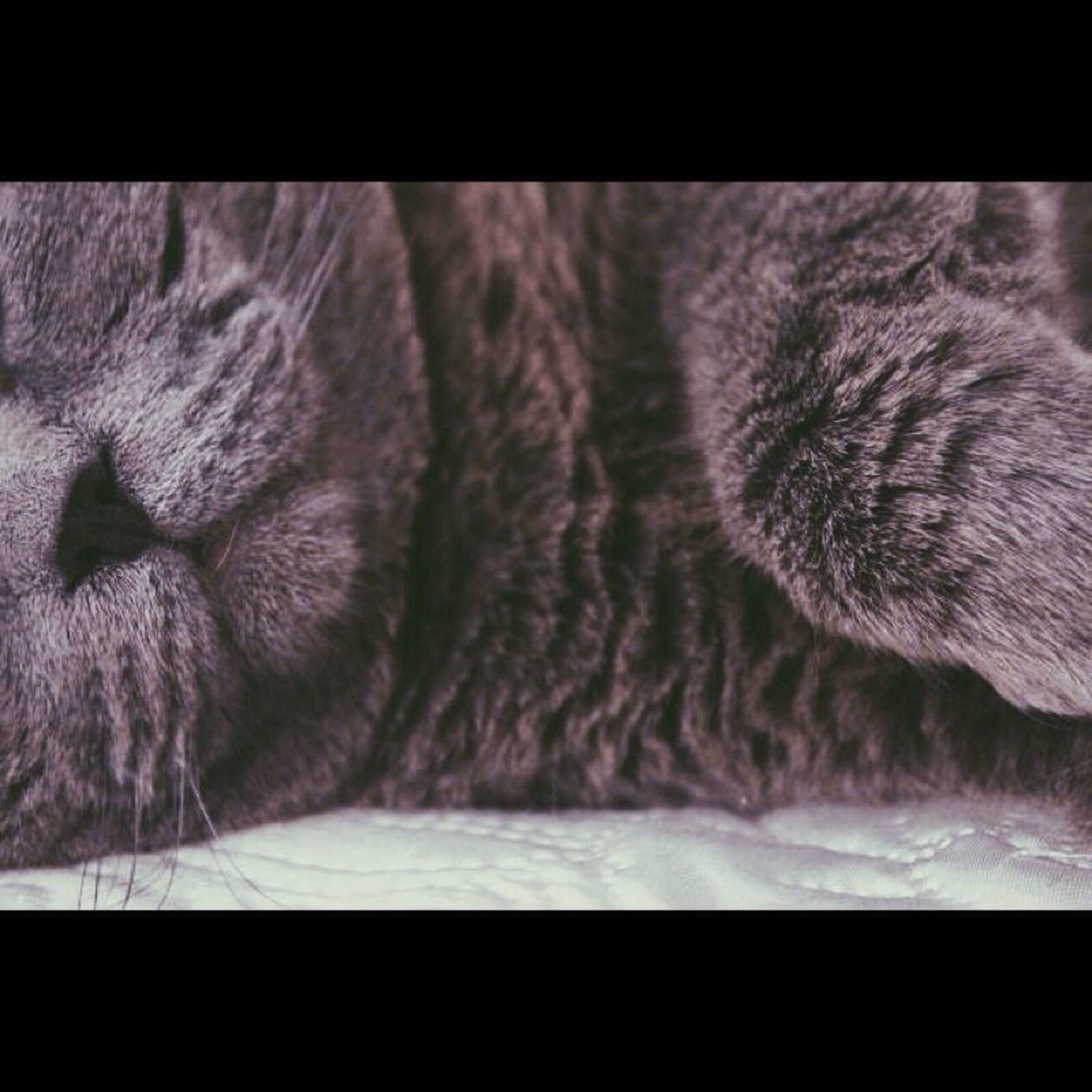 transfer print, animal themes, domestic animals, one animal, indoors, pets, mammal, auto post production filter, close-up, sleeping, animal body part, domestic cat, animal head, relaxation, cat, part of, eyes closed, animal, zoology, selective focus