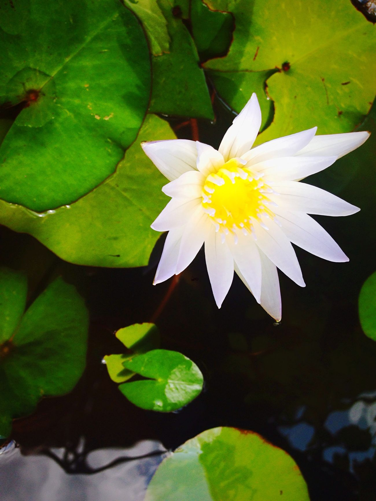 Taking Photos Relaxing flower
