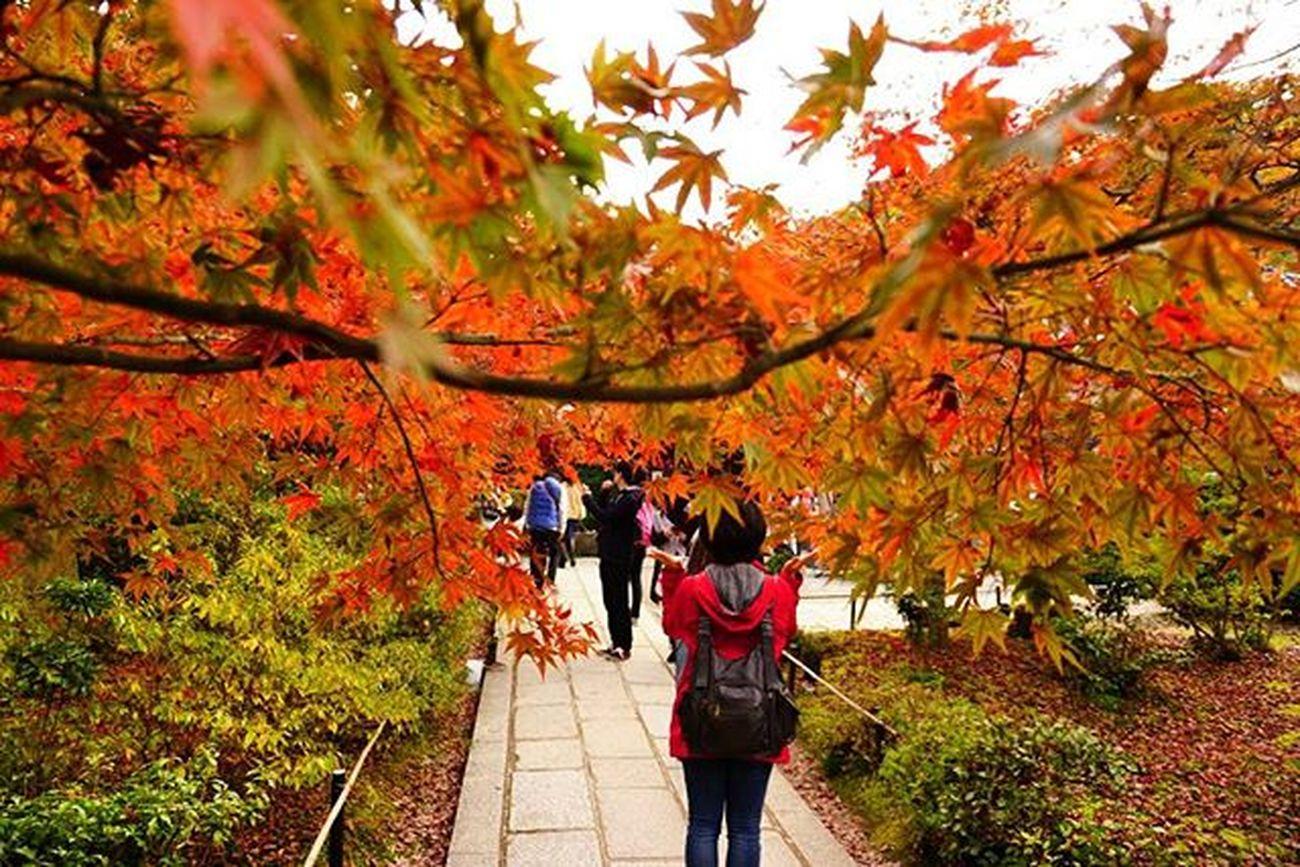waaaaaa ❀.(*´▽`*)❀. . Travelgram Nofilter 常寂光寺 Kyoto Japan 😚 😚 もみじ 紅葉 紅葉狩り Red Yellow 嵐山 嵯峨野 京都 ColorsOfAutumn Fall Autumn Autumnlove
