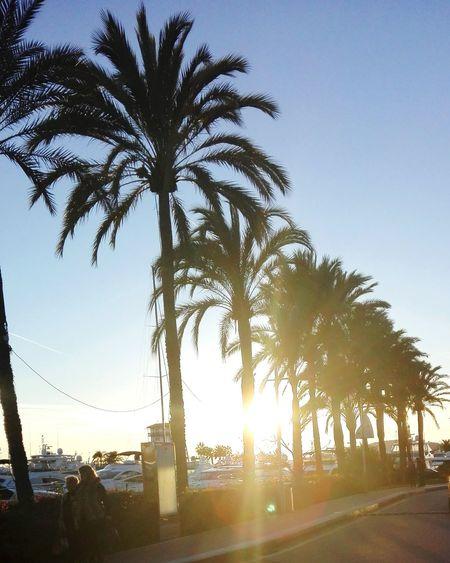 Palm Tree Tree Sunset Outdoors Sky Sunlight Glow Dusk Sunbeam Boats Yachts Superyacht Ray Of Light Port Puerto Puerto Portals Portals Nous Mallorca