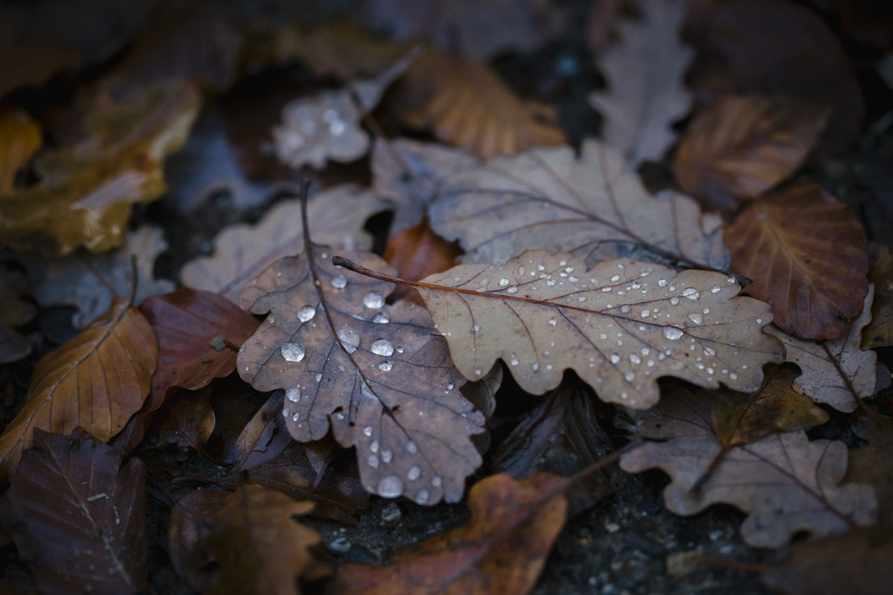 Autumn Beauty In Nature Change Change Of Seasons Close-up Drop Foilage Foliage Foliage, Vegetation, Plants, Green, Leaves, Leafage, Undergrowth, Underbrush, Plant Life, Flora Fragility Freshness Leaf Nature Outdoors Rainy Rainy Day Rainy Days Season  Seasonal Water Waterdrops