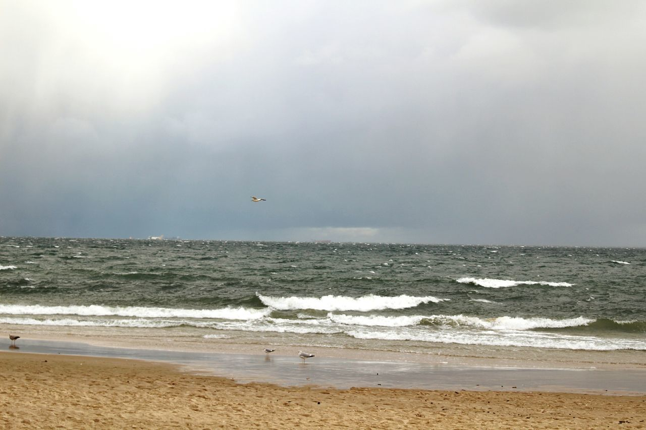 sea, horizon over water, beach, nature, beauty in nature, wave, water, scenics, sky, outdoors, day, motion, no people, sand, flying, animal themes, bird