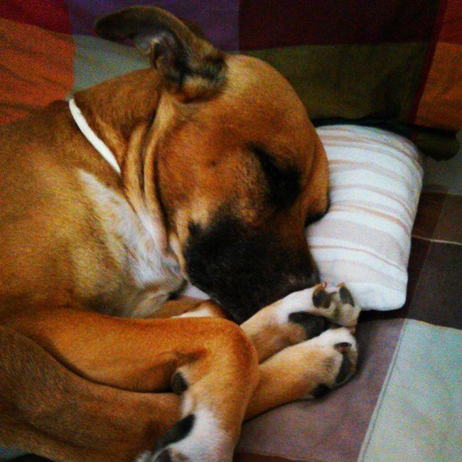 Kio Kioilprincipe ......io dormo sul tuo cuscino...tu..vai sul divano.,.... Soloamoreallostatopuro