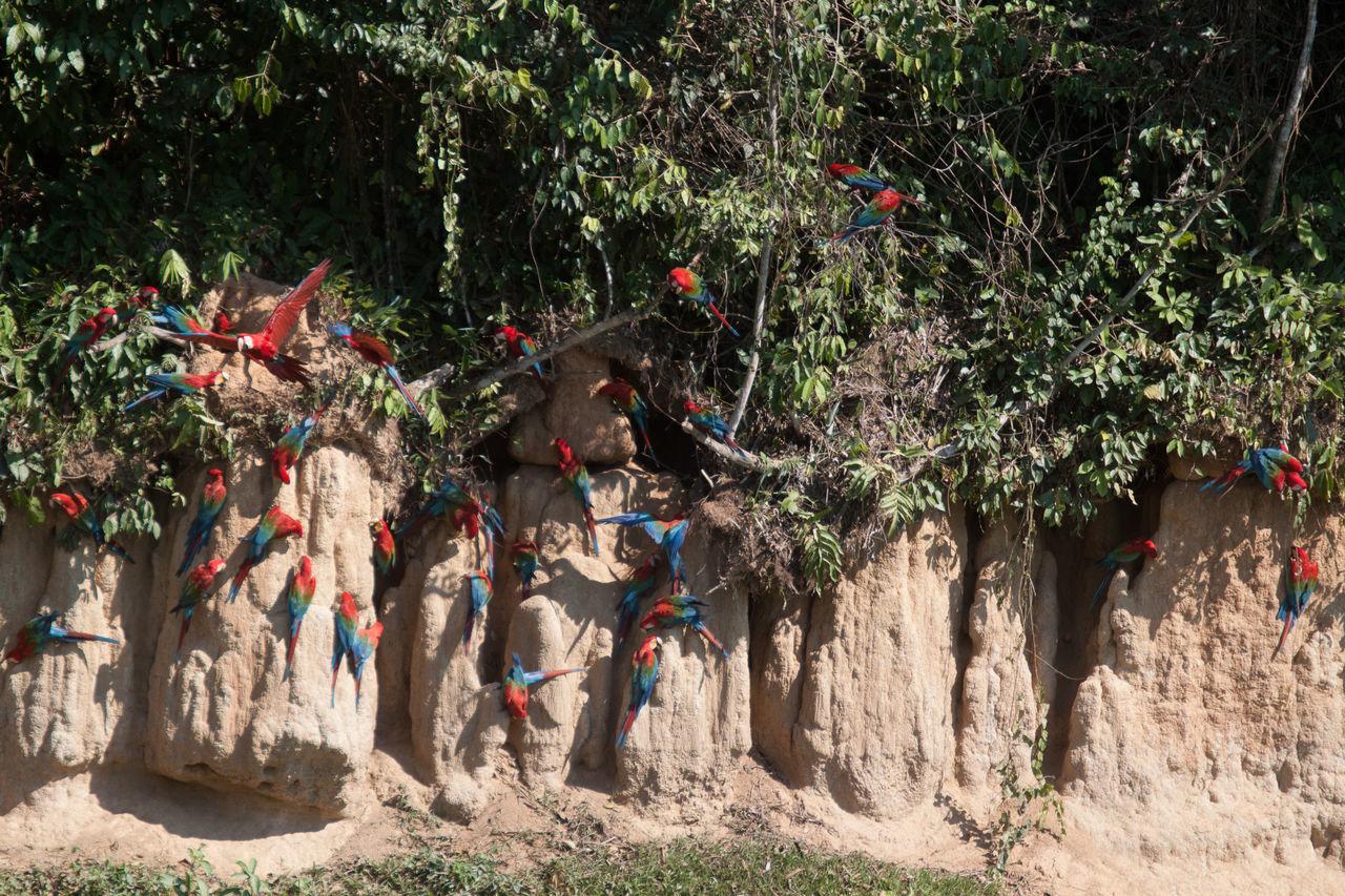 Beautiful stock photos of parrot, Animal Behavior, Animal Themes, Animals In The Wild, Bird