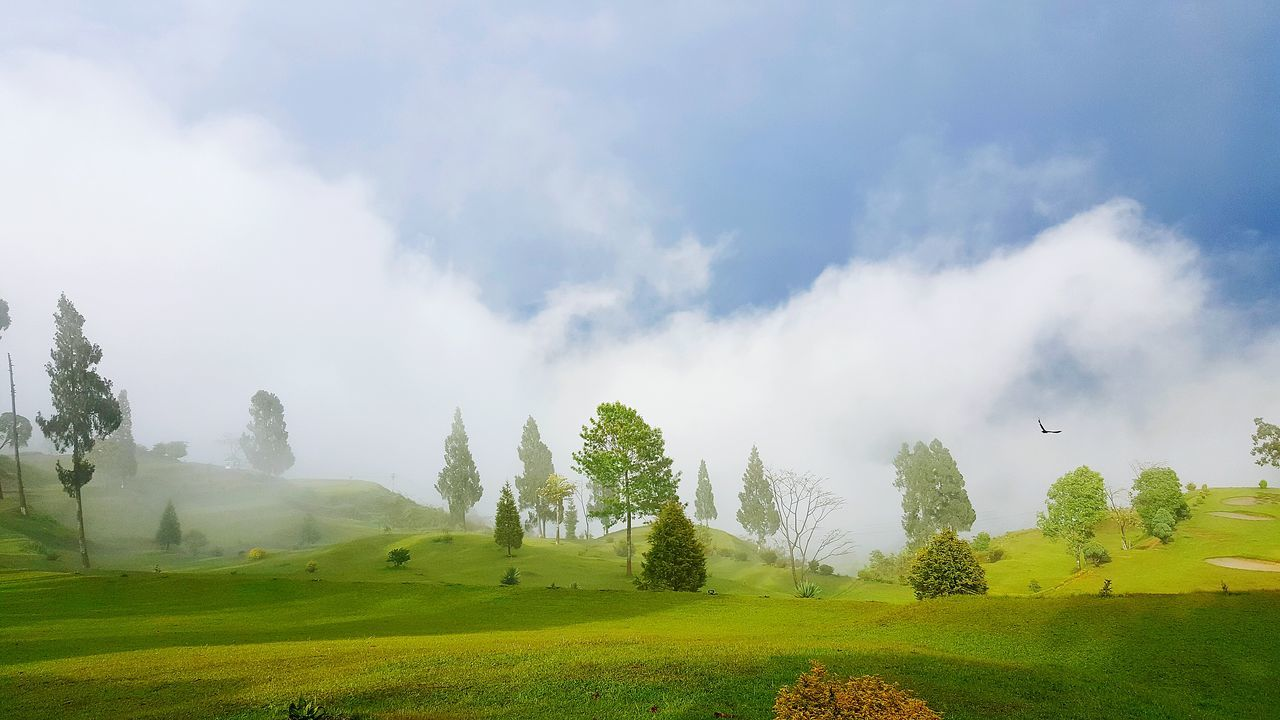 nature, tranquility, beauty in nature, tranquil scene, green color, landscape, scenics, tree, sky, no people, grass, day, field, idyllic, growth, outdoors, cloud - sky