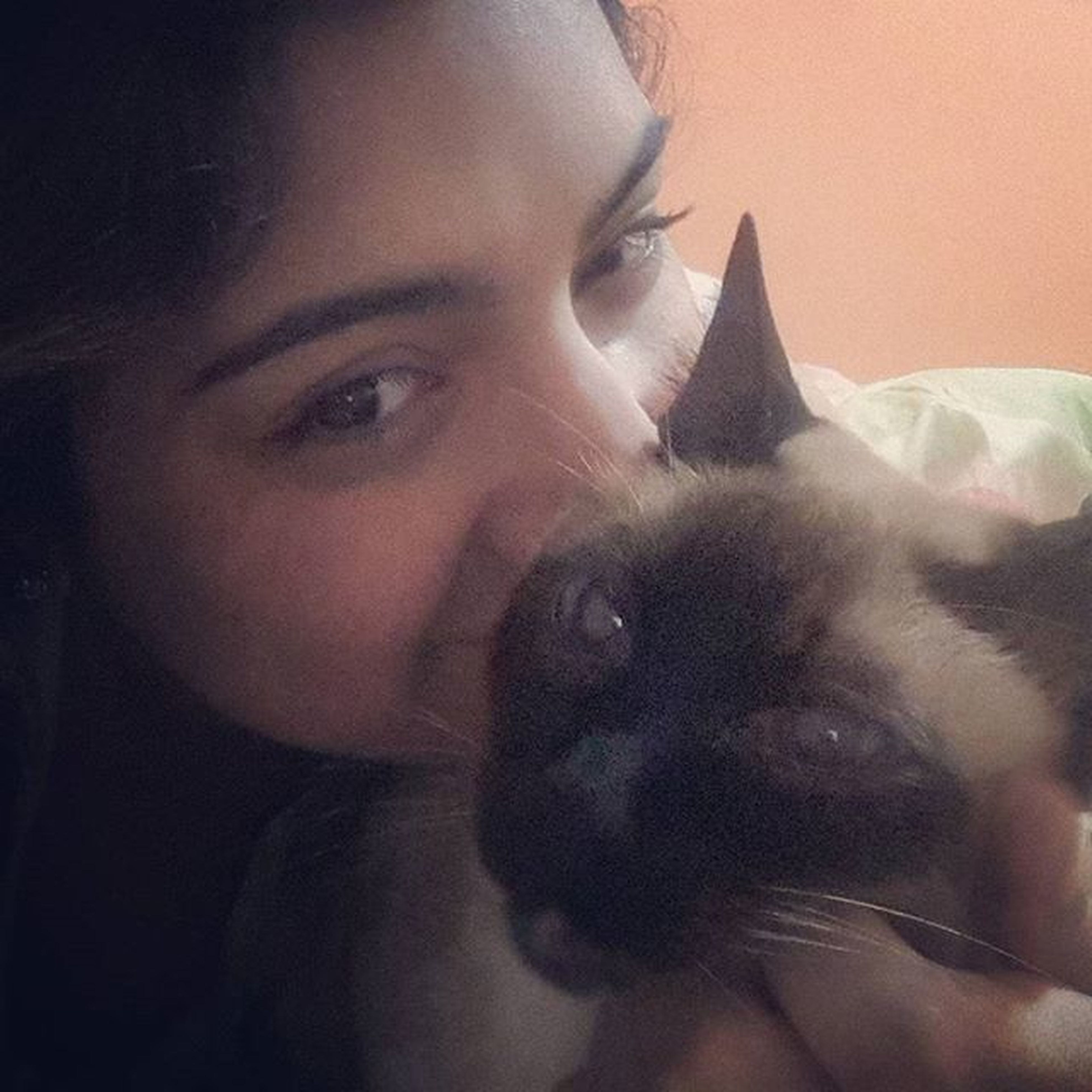 El nonoso Kittycat Natural Sleepfaces