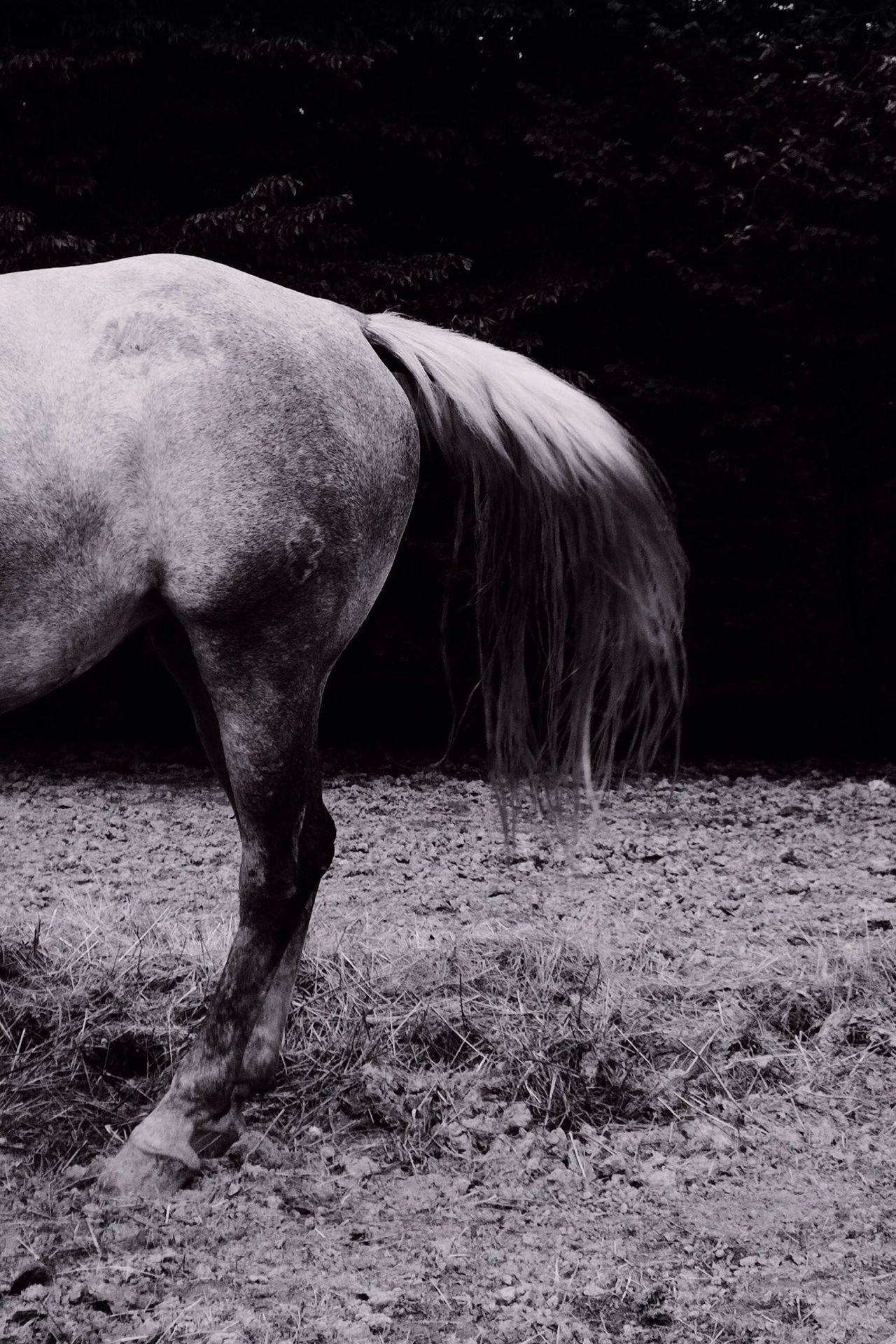 Beautiful stock photos of horse, Croatia, Day, Domestic Animals, Horse