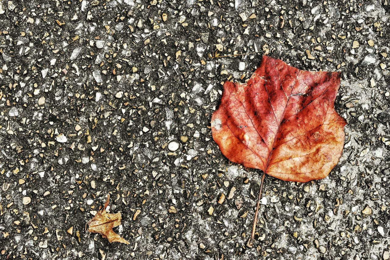 Autumn Leaves Parking Lot Colorful Gray Gravelly
