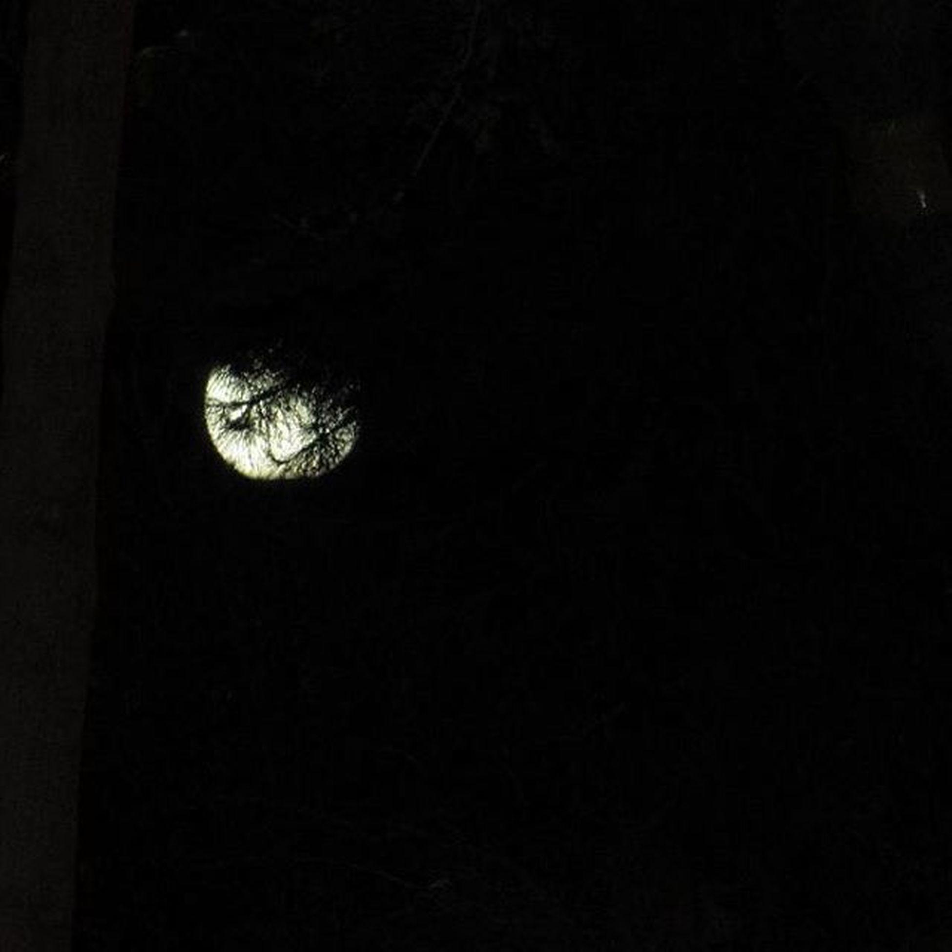 ……………………………………………………………………………………………………… یار_جانی_من_اگر_نماید_نگاهی نماید_از_شفقت_نگاهی_به_ماهی از_شب_غم_من_آن_مه_زداید_سیاهی . . . شاه_من_ماه_من شب همان قرار همیشگی :-) شب راز هرگز فاش نشده است ... برای هر کس رمزی و رازی دارد... از عارفان و عاشقان و مستان گرفته تا دزدان و شبگرد ها و مجانین... ماه مثل آیینه ای هست که هر کس ب آن نگاه کند خودش را میبیند... معشوقش را میبیند... یا غمها و ترس های ریخته در خود یکی شب تا صبح فقط با خودش کلنجار میرود یکی شب را اشک میریزد بی صدا تا مبادا کسی متوجه شود یکی عاشقانه هایش را مرور میکند... یکی... این یکی ها ... یکی یکی زندگی میکنند و یکی یکی میمیرند این یکی ها هر کدامشان جهانی هستند به وسعت شب… همه یکی ها سزاوار ستایشند:-) :-) . . پ ن۱:یه_شب_مهتاب فرهاد_مهراد پ ن۲:شب من بخیر نمیشود… پ ن۳:اولین تحقیق :-)) پ ن۴:حس درد کهنه پ ن۵:تولد دوباره در خوابگاه پ ن۶:گل_پاییزی_من هانیه_سامعی ۱از چنتا عکس ماه:-))) Photo by:گل_پاییزی_من ۷/۲/۹۵ ۰۲:۲۰ ………………………………………………………………………………………………………
