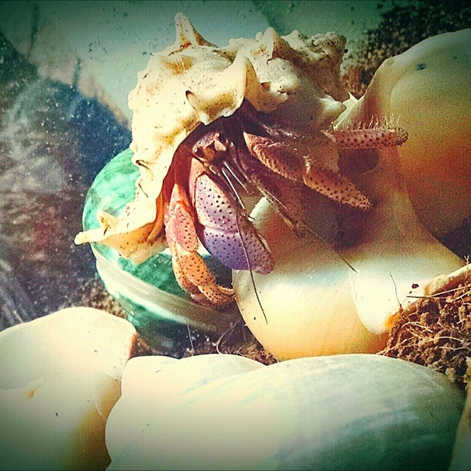 Close-up Indoors  Pet Photography Big John One Animal Nature Pet Hermit Hermit Crabs Insect I'm June! I'm 10