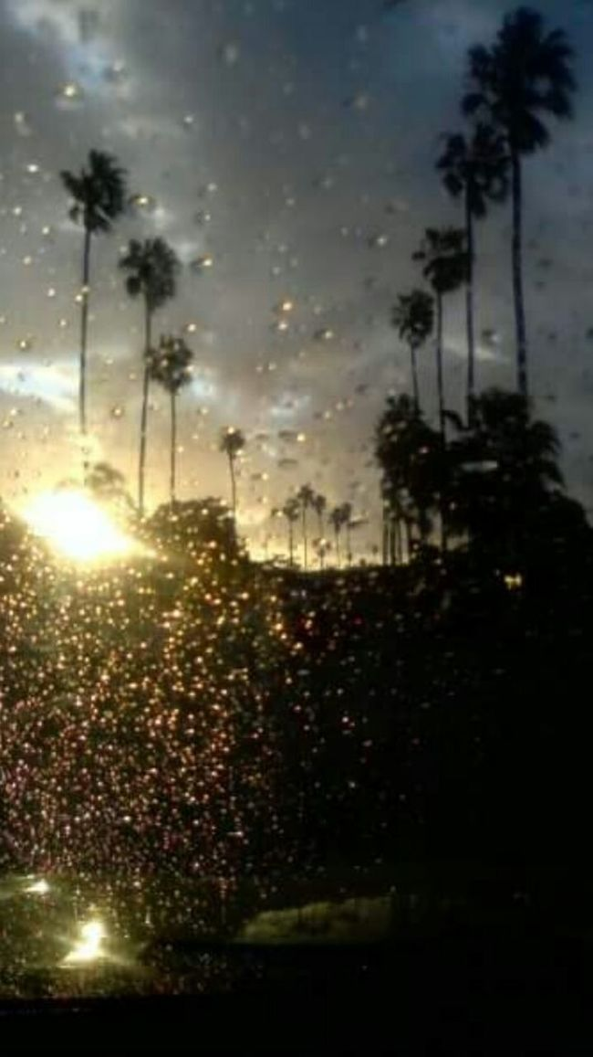 Ob 1502 Ocean Beach From My Point Of View Palm Trees Raindrops Sunshineaftertherain