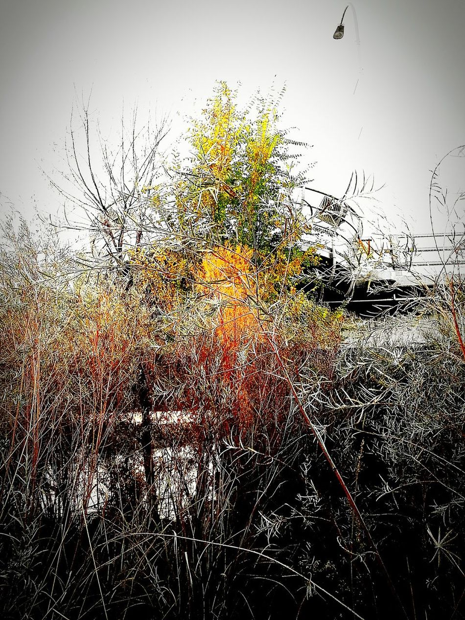 Bosque Riogrande Cottonwood Trees River Fall Beauty Fall Leaves Fall Colors Redpoint B&w Nature_collection Bridge Hanging Out Taking Photos Check This Out Hello World Relaxing Enjoying Life