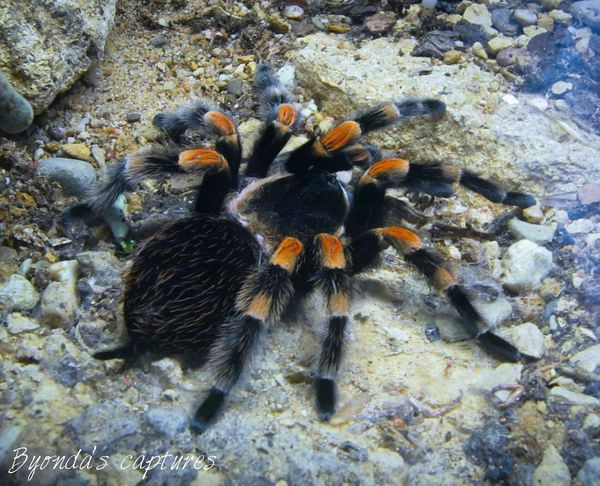 Spiders Zoo Animals  Artis  Amsterdam Photography Byondascaptures Www.facebook.com/byondascaptures