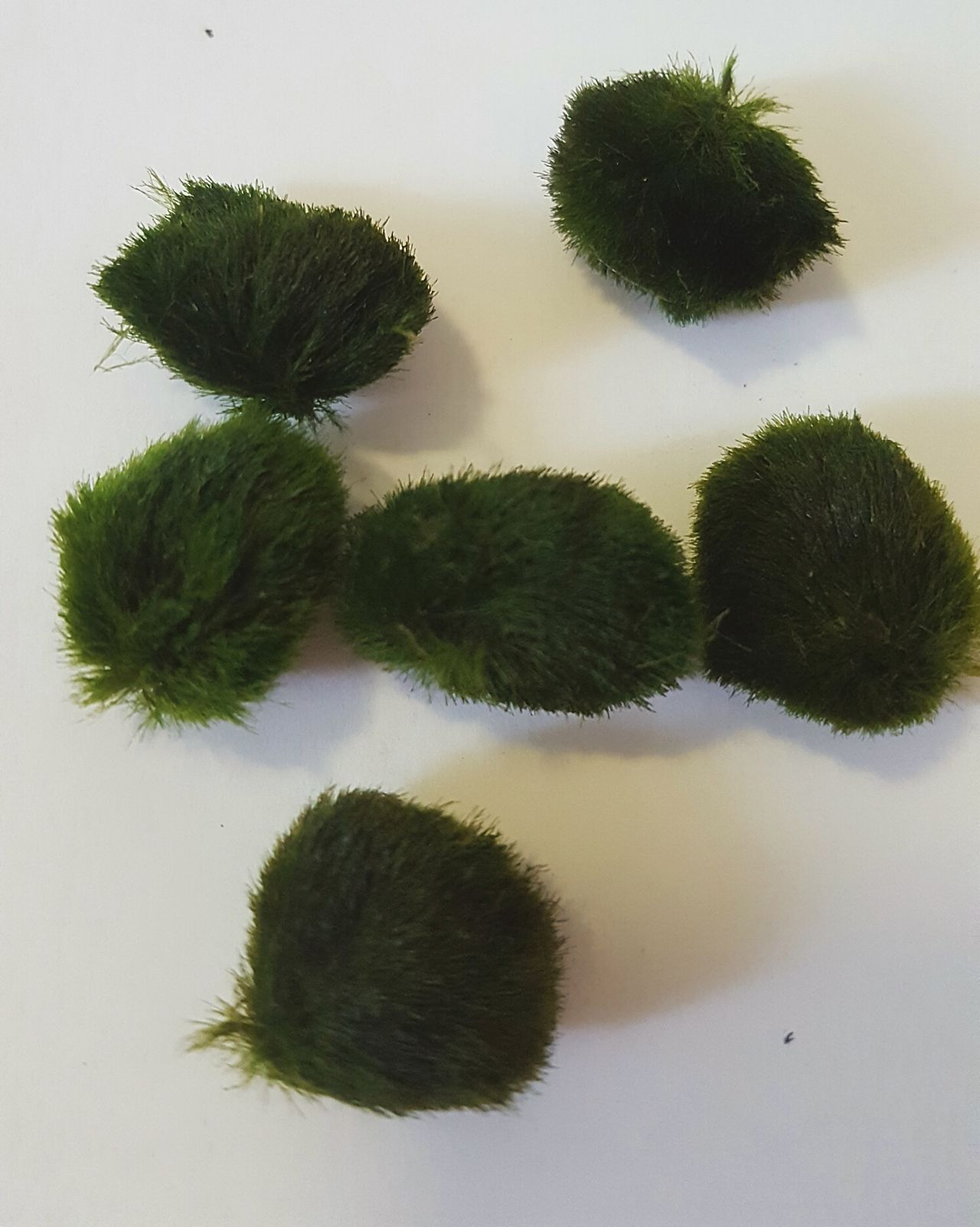 White Background Close-up Moss Mossball Moss Balls Moss Ball Moss Close Up Moss Art