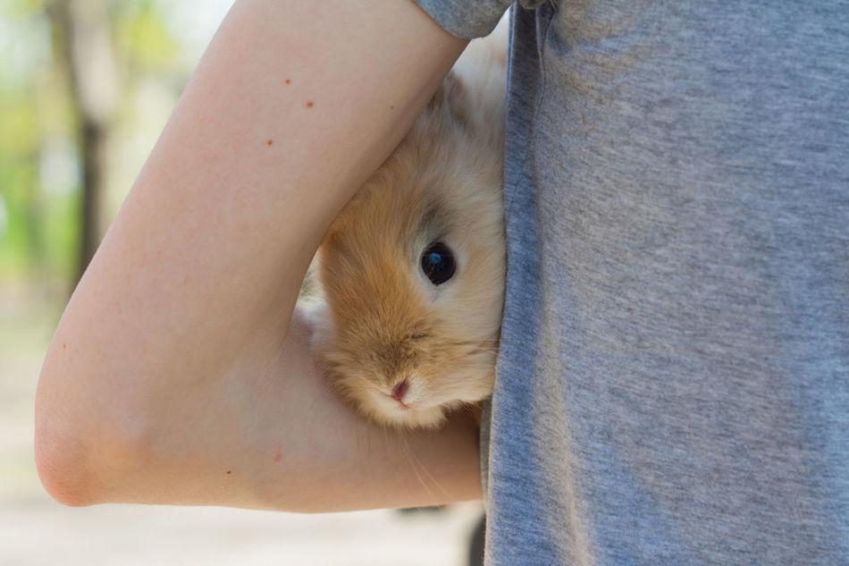 Beautiful stock photos of hasen, Animal Themes, Baby Rabbit, Bonding, Carrying