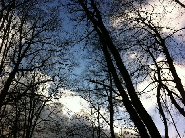 Bare Tree Beauty In Nature Blue Branch Cloud Cloud - Sky Day Growth Idyllic Low Angle View Nature No People Non Urban Scene Non-urban Scene Outdoors Scenics Sky Tranquil Scene Tranquility Tree Tree Trunk Weather WoodLand