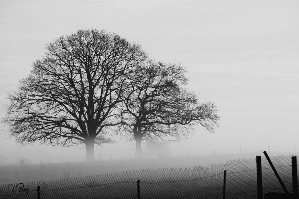 I love these 2 trees, entwined in a dance known to them alone or in a big hug... i wish you a beautiful day 💕 EyeEm Nature Lover Beauty In Nature Minimalism Bwn_friday_eyeemchallenge Foggy Morning Tree Outdoors No People EyeEm Bnw Black And White Photography Tranquil Scene Blackandwhite EyeEm Best Shots Tree Silhouettes Fog Quiet Moments Minimalobsession Ladyphotographerofthemonth