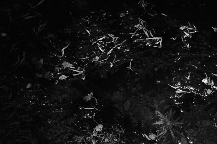 Dark Abstract Blackandwhite Close-up Day Forest Growth Monochrome Mystery Nature No People Outdoors Plant Scenery Underwater