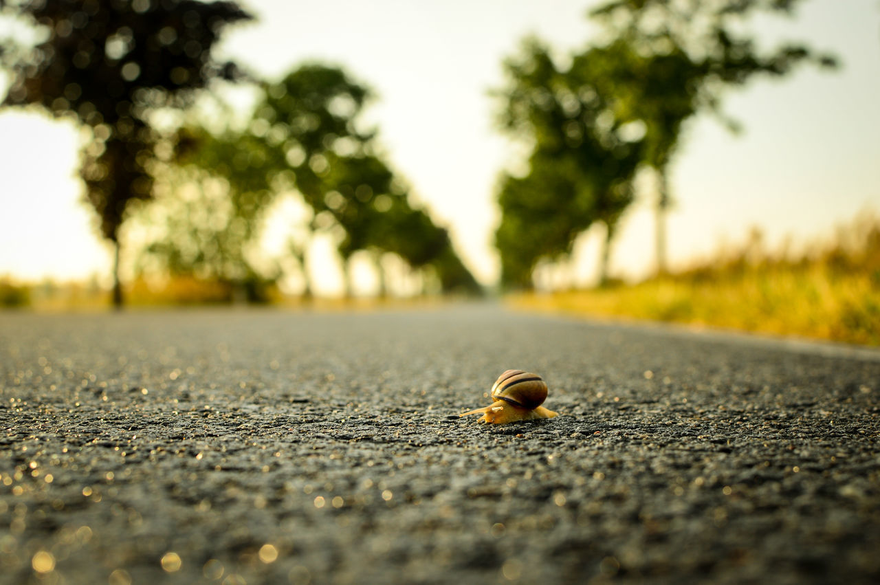 Wild animals in the city ;-) 3/4 Acorn Animal Themes Close-up Concrete Concrete Floor Day Empty Road Empty Street Focus On Foreground Low Angle View Nature No People Nut - Food Outdoors Selective Focus Snail Surface Level Sundset Quiet Road