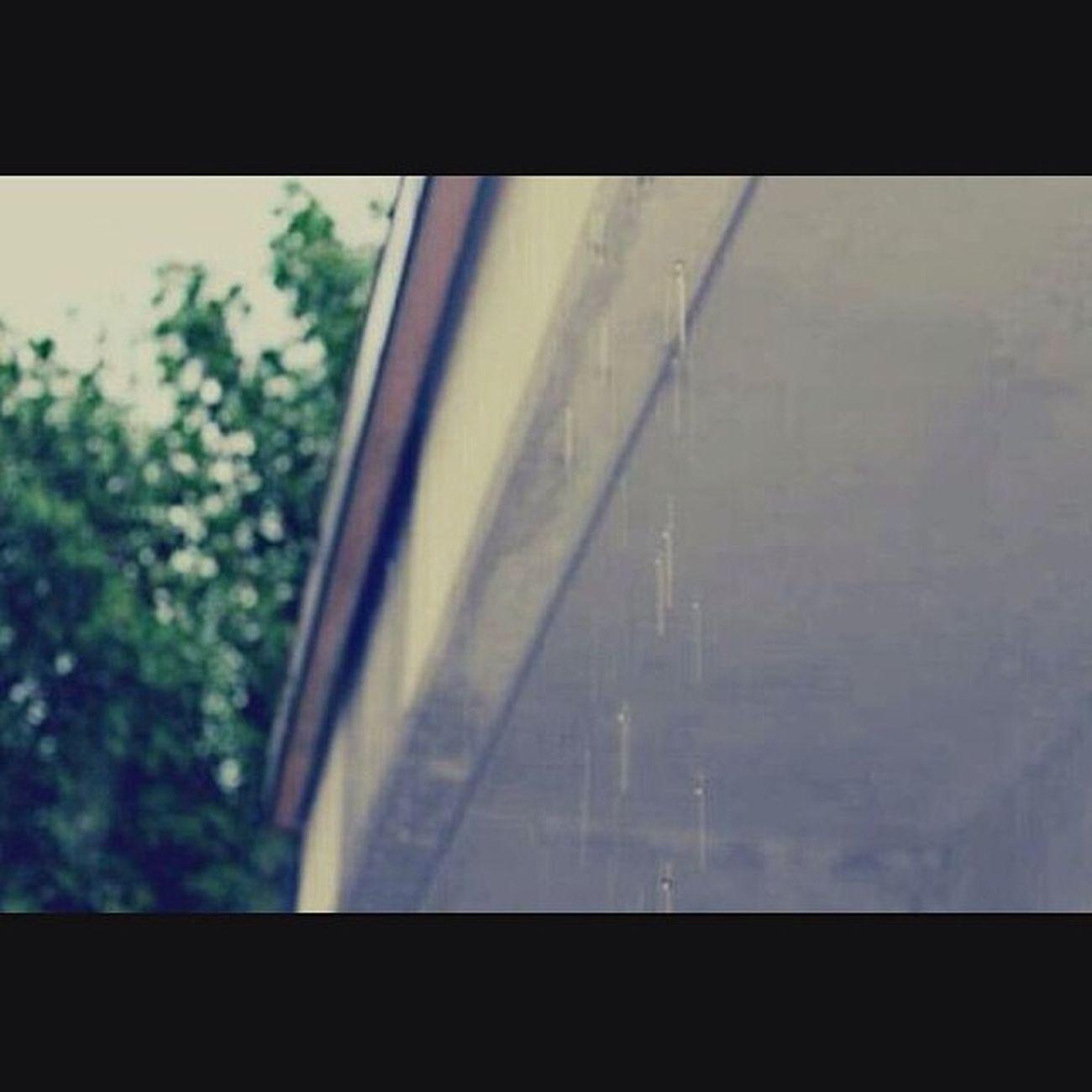 فإذا أردتَ أن تحيَا سعيدًا فقط انسى تفكر في السعَادة !! شجر مطر بيتنا ??.