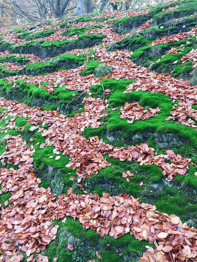 Herfst op Landgoed Clingendael in November