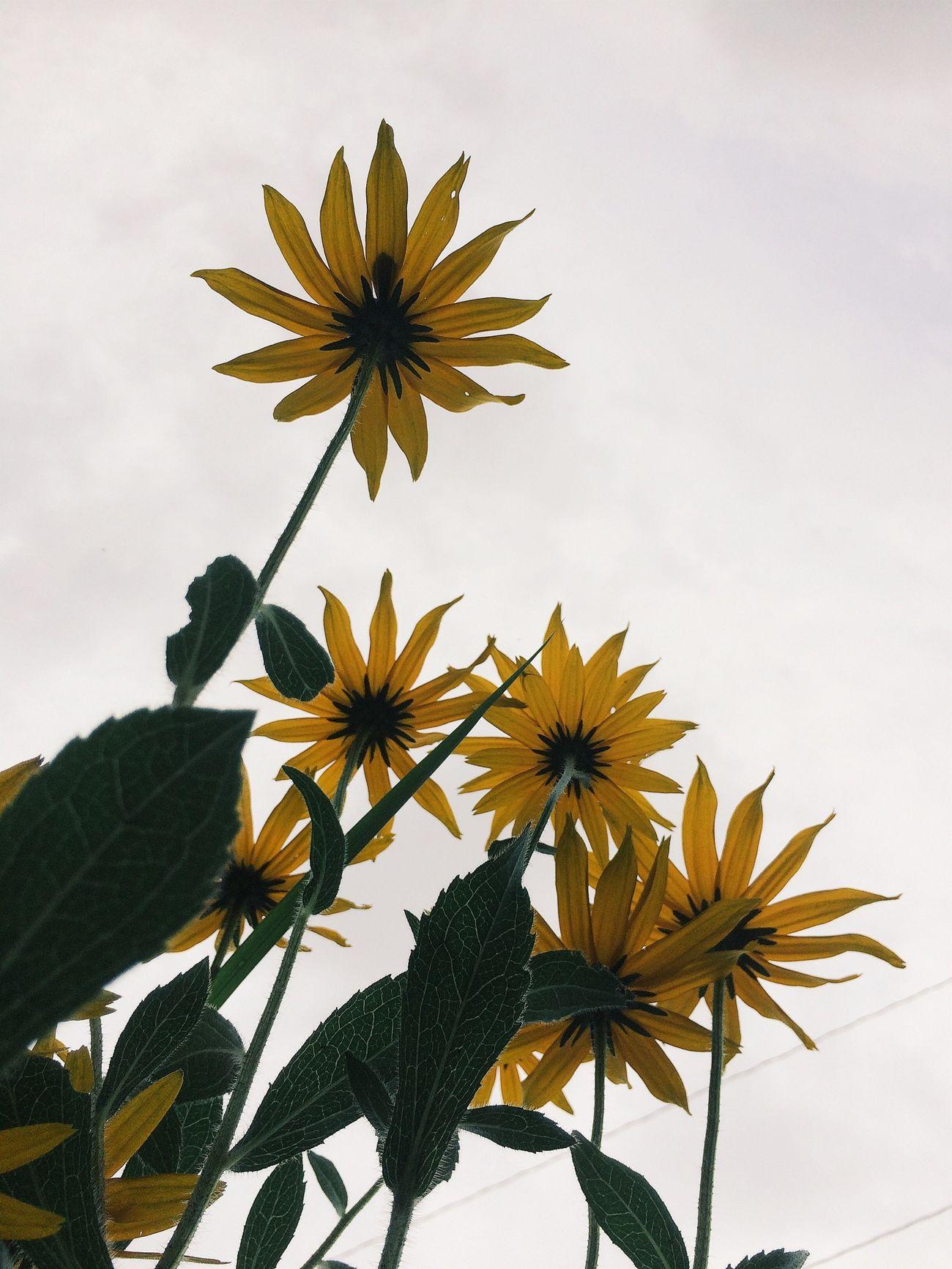 Enjoying Life Landscape_Collection Morning Flowers