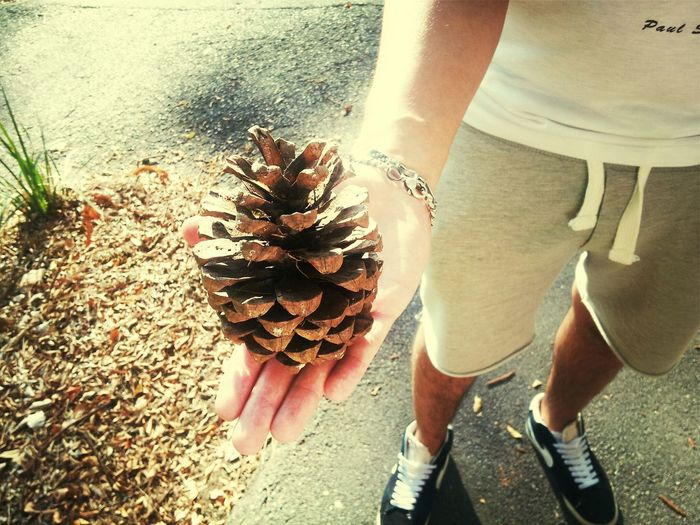 Australia Pine Cones Steroids In Australia, everything seems to be on steroids..