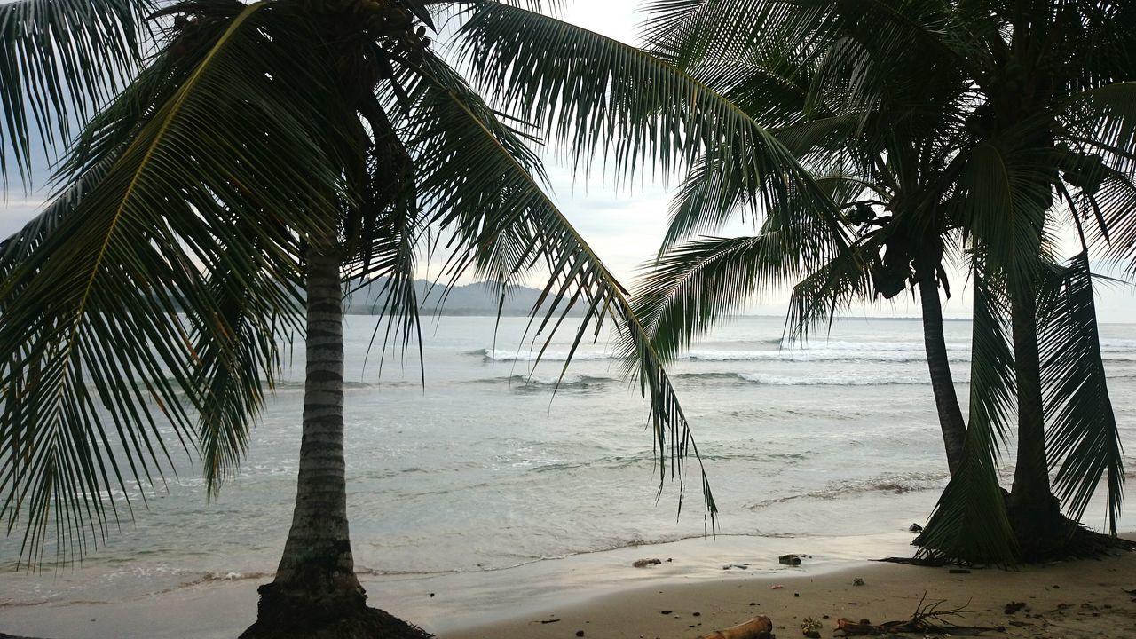 Tree Beach Palm Tree Water Nature Sea Sunset Tranquility Caribbean Caribe Caribbean Sea Puravida Pura Vida ✌