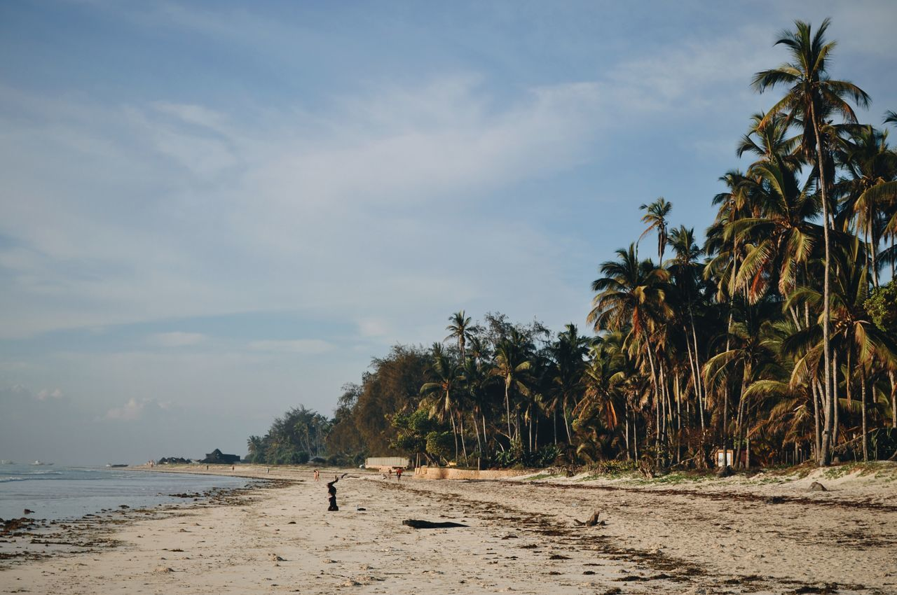 Diani Beach, Ukunda, Kenya. Tree Beach Nature Palm Tree Sand Outdoors Landscape Kenya Adventure EyeEm Best Edits Travel Africa VSCO EyeEm Best Shots Travel Destinations Ocean Indian Ocean Diani Beach Minimal