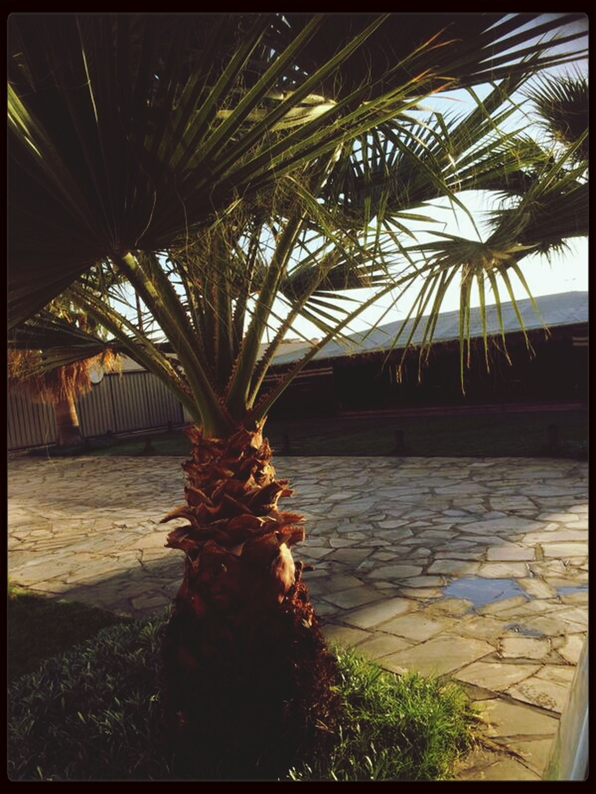 transfer print, auto post production filter, tree, palm tree, sunlight, growth, water, shadow, nature, beach, tranquility, sky, day, branch, no people, outdoors, sea, plant, sand, built structure