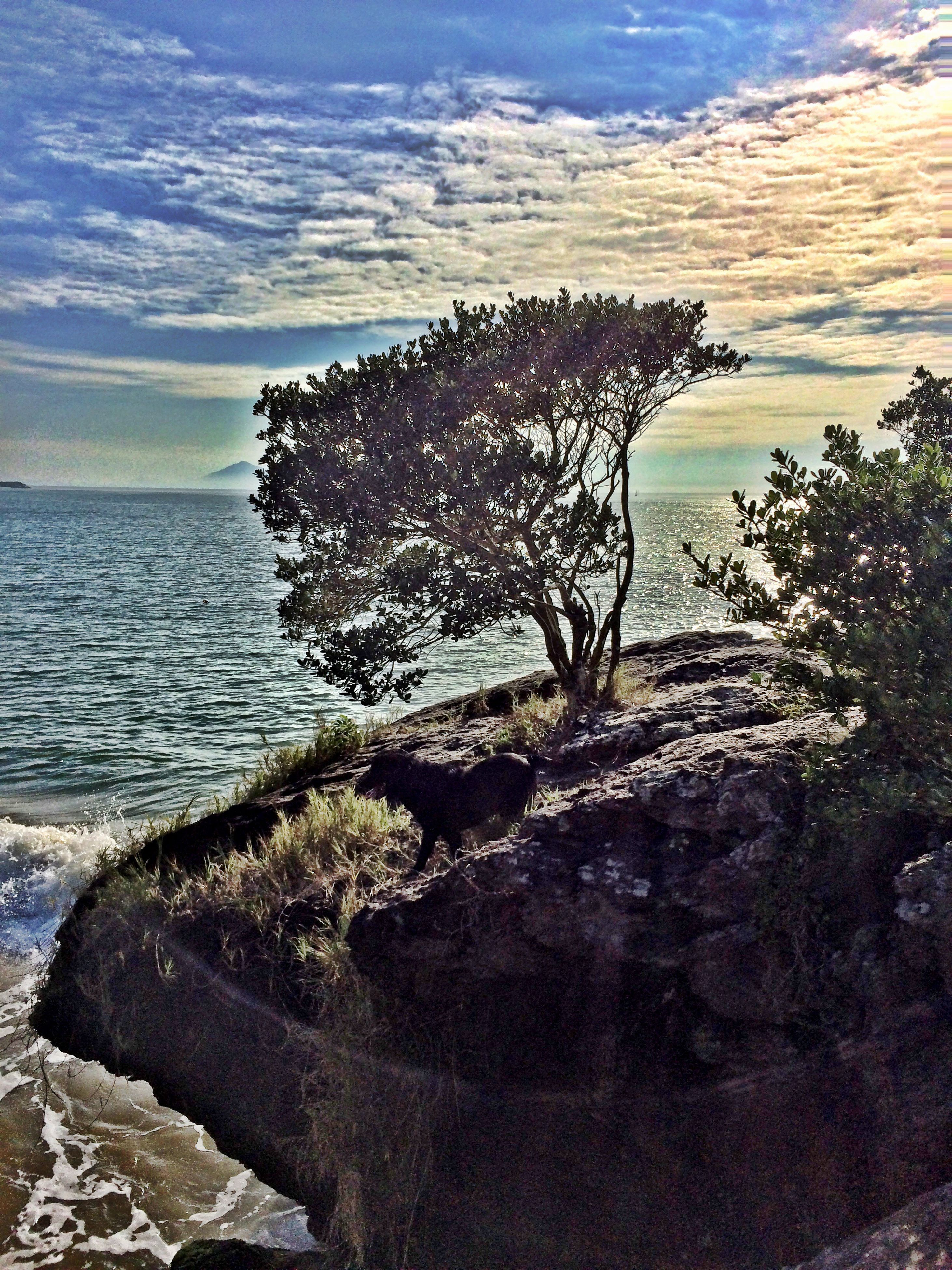 water, sea, tranquility, tranquil scene, beauty in nature, scenics, nature, sky, rock - object, horizon over water, idyllic, day, growth, rippled, outdoors, no people, remote, non-urban scene, plant, rock formation, cloud - sky, non urban scene, cloud