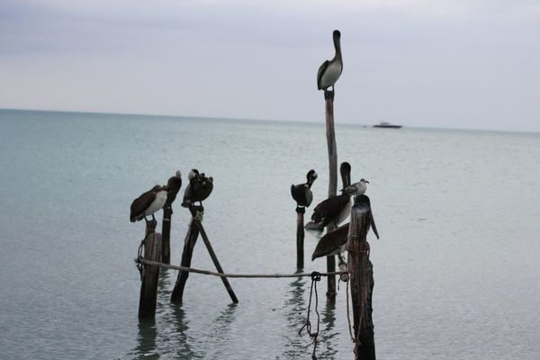 birds at Isla Holbox by Mayka Navarro