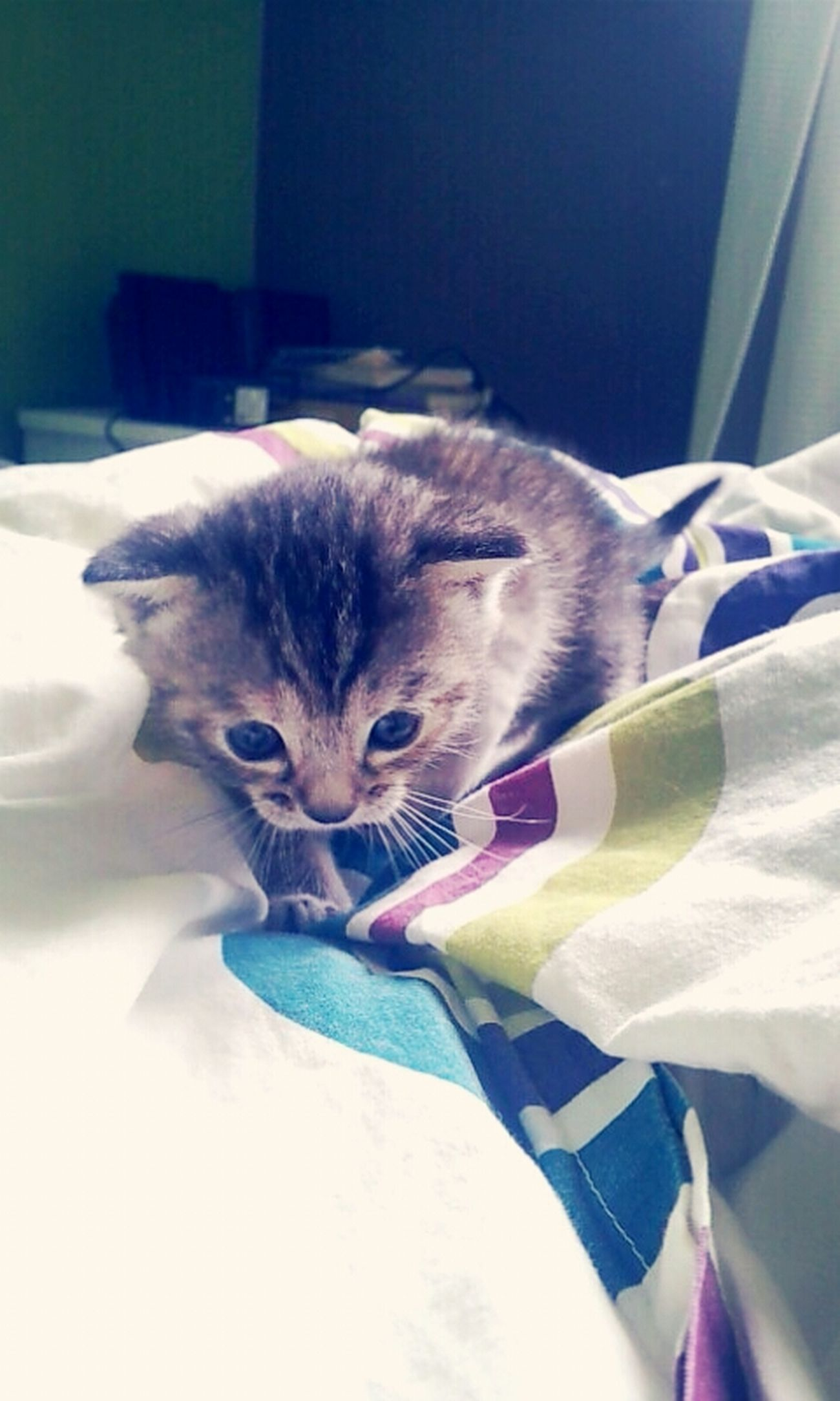 Kattycat Cat Tala Nuna ♡
