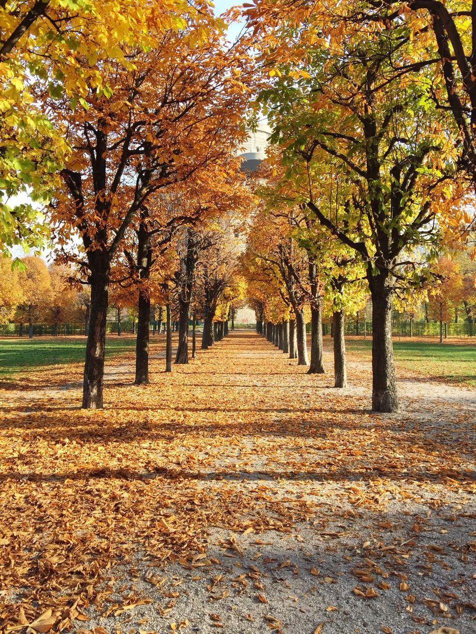 Beautiful stock photos of vienna, change, season, autumn, tree