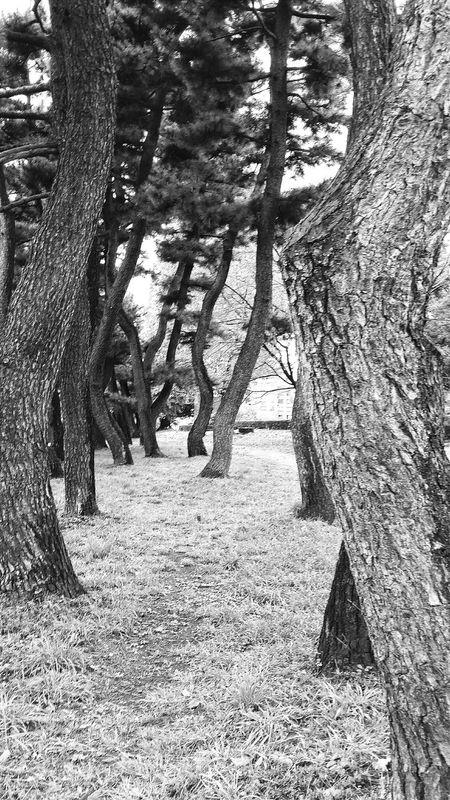 Trees Trunk Bark Chiyoda Tokyonature Nature Naturephotography Nature_collection Chiyodanature Bnw Bnwphotography Bnw_collection Bnw_world Bnw_captures Bnw_tokyo Bnwnature Tokyo Japan Travelphotography