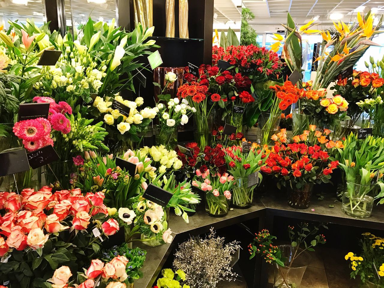 Flower Freshness Nature Beauty In Nature Botany Petal Multi Colored Flower Head Tulip Blooming Flower Shop Shop Store