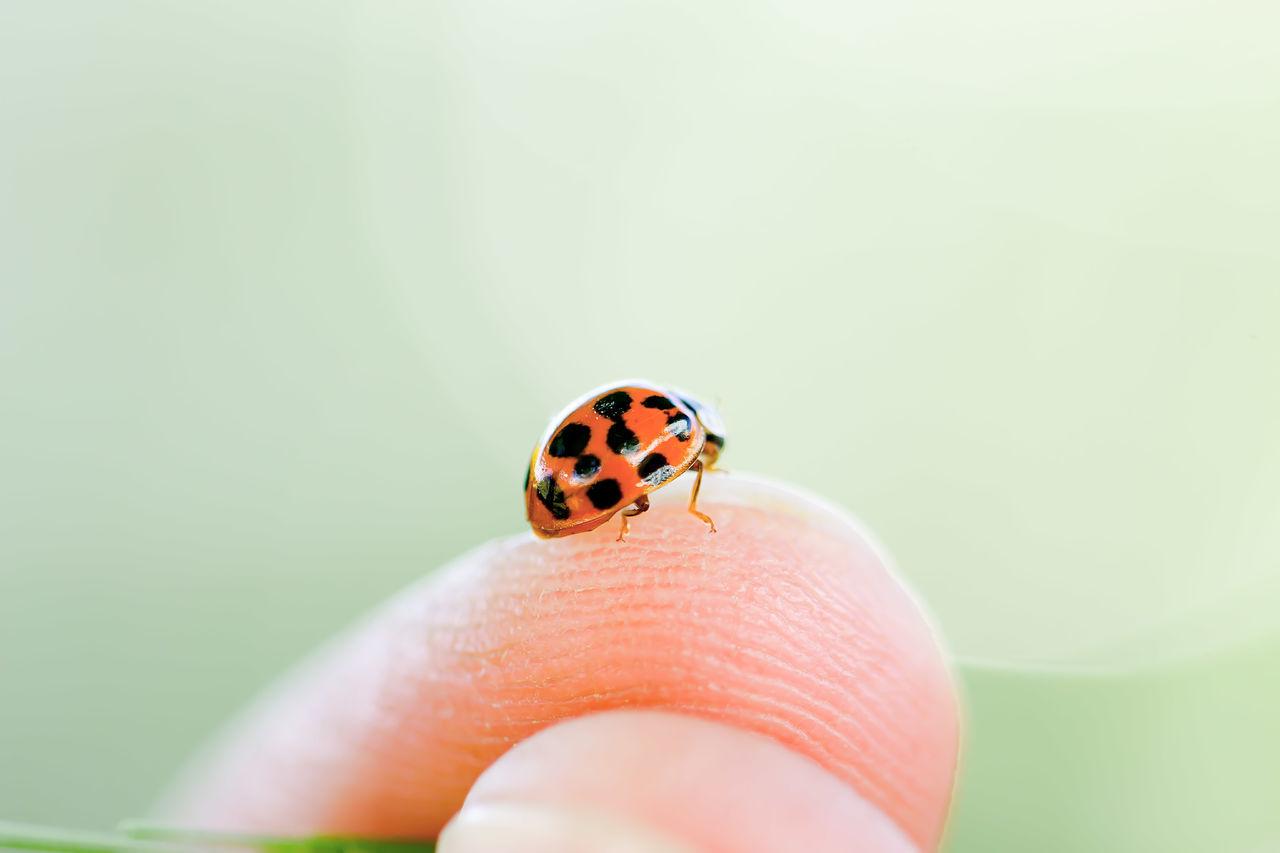 Ladybug LadyBugLove Ladybugmacro Exceptional Photographs This Week On Eyeem Close-up