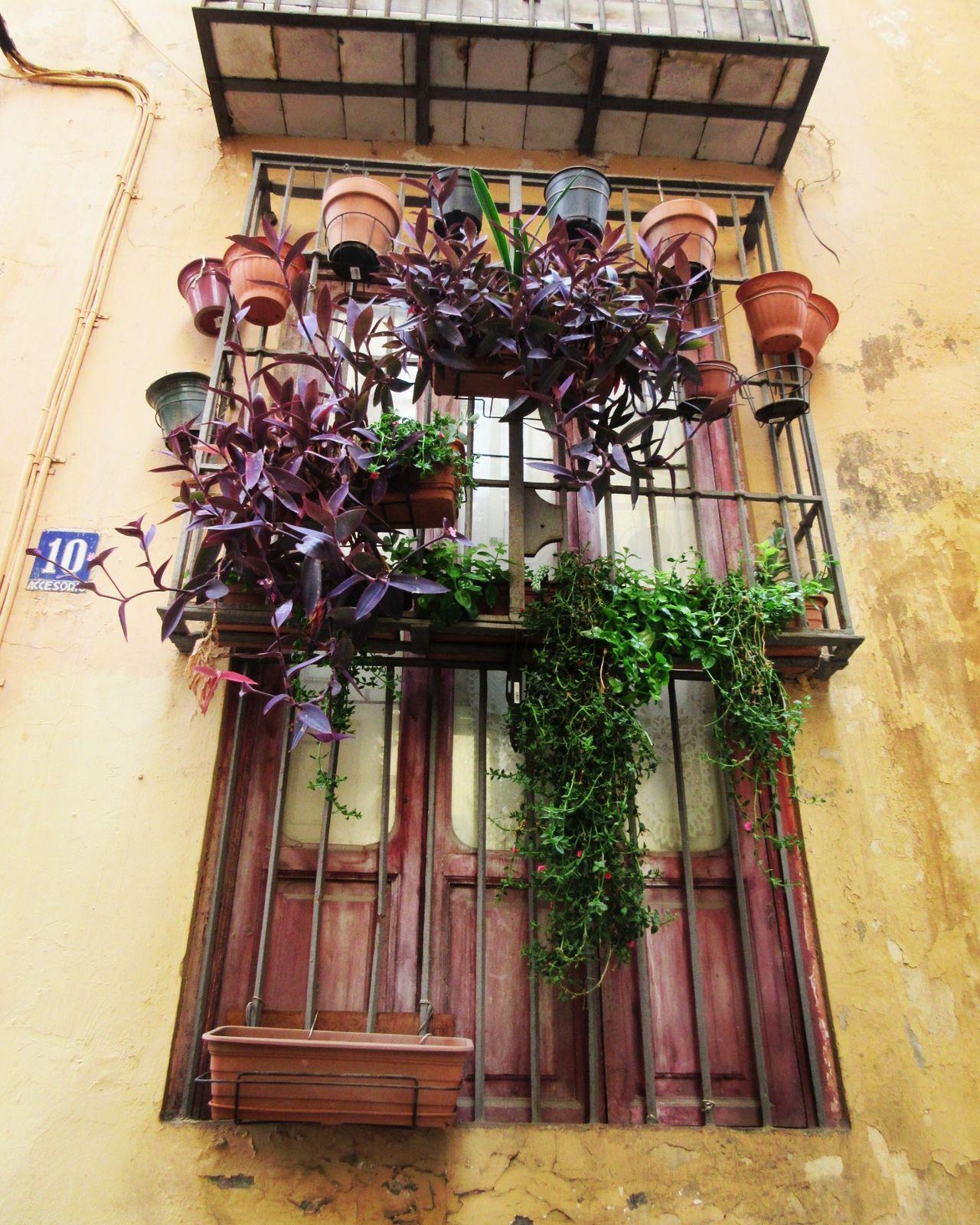 Finestres Ventanas Puertas Y Ventanas Window País De L'olivera Callejeando Casa València
