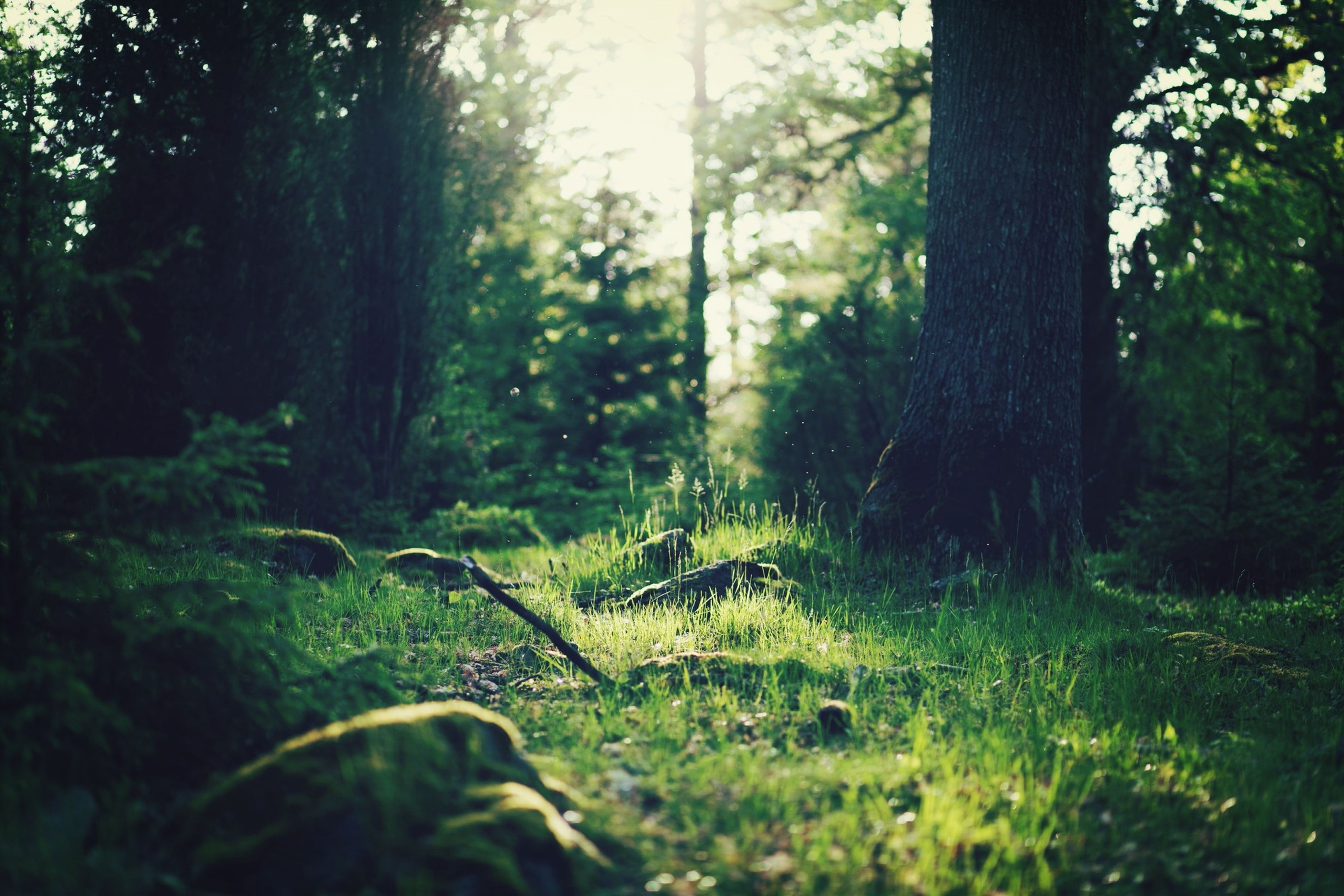 Natural Forest Relaxing