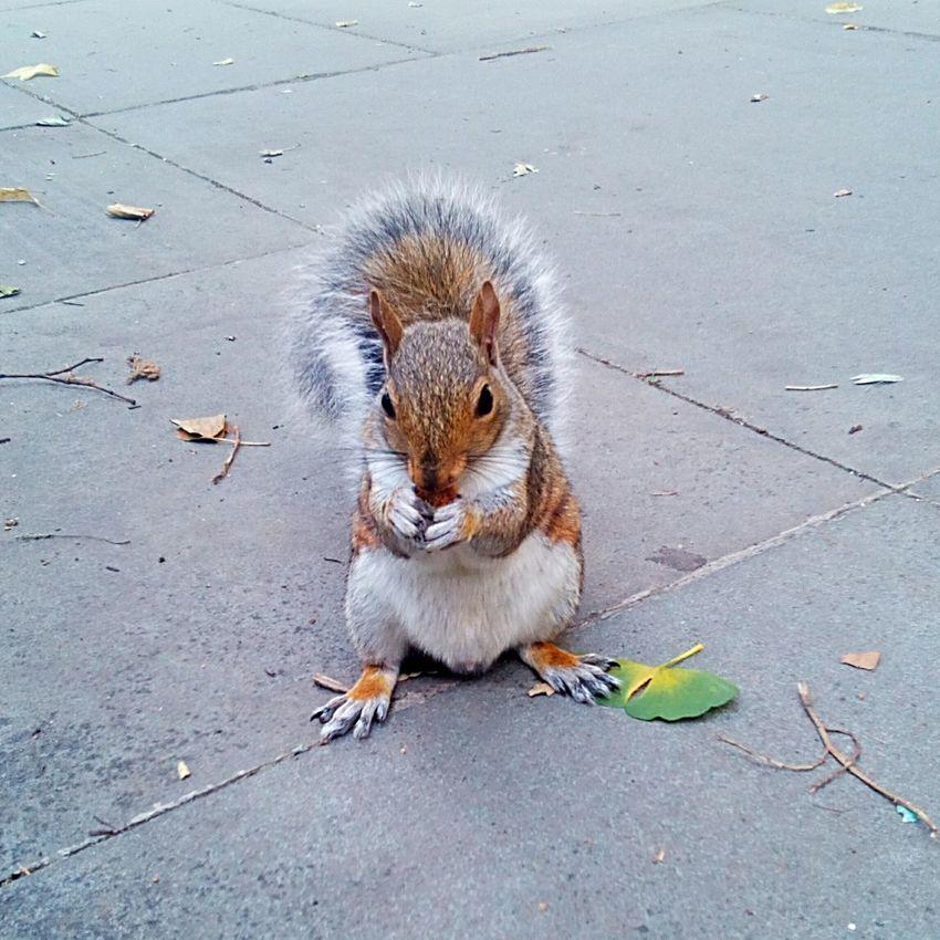 Squirrel Squirrel Photo Squirrel Eating Squirrel Closeup Animal Themes Nature